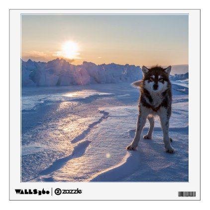 Sled Dog on the Sea Ice   Qaanaaq Greenland Wall Decal - walldecals home decor cyo custom wall decals