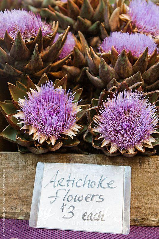 Box of blooming artichoke flowers with a price tag at a farmers market by Mihael Blikshteyn for Stocksy United