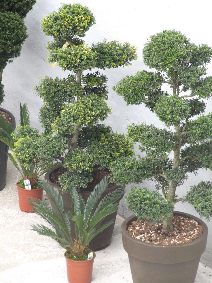1000 ideas about mediterrane pflanzen on pinterest. Black Bedroom Furniture Sets. Home Design Ideas