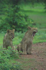 Africa Overland Tours: Nairobi to Cape Town photo safari