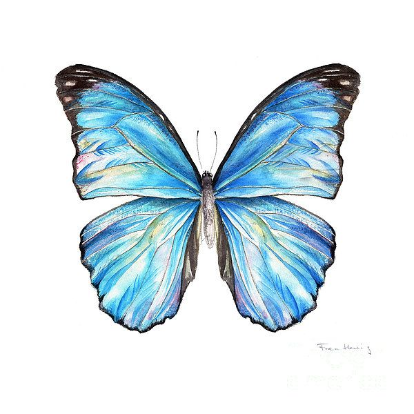 Blue Morpho Butterfly Painting  - Blue Morpho Butterfly Fine Art Print