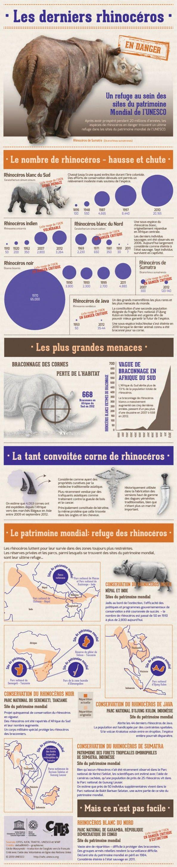 Les derniers rhinocéros  espèces en voie d'extinction