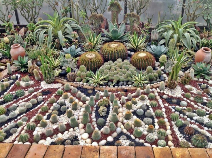 paraisos de cactus en jardines patios cactus crasas y suculentas pinterest cactus and. Black Bedroom Furniture Sets. Home Design Ideas