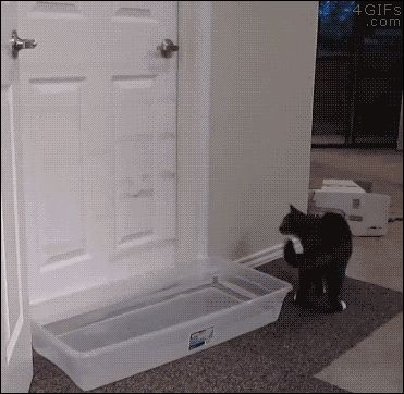 cant keep the cat out funny cute animals cat adorable gifs lol gif aww funny animals