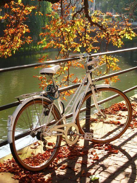 Promenade à vélo—Automne Une ville où l'on peut vraiment faire du vélo, c'est appréciable !