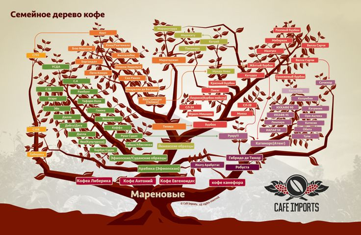 Cafe Imports  | Coffee Varieties