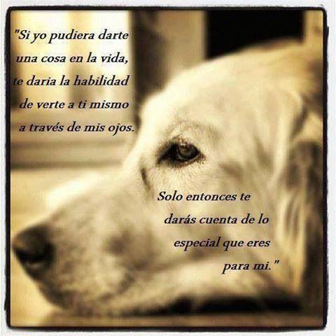 Eres muy Especial, porque Eres parte De mi Vida, Eres Parte Mi Corazón❤ Mi Cachorro