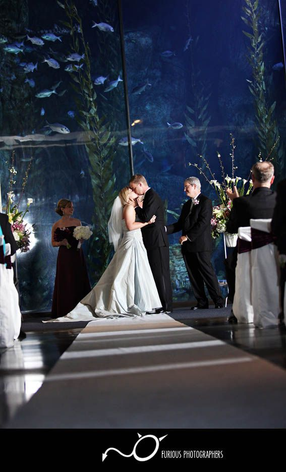 beach wedding in new jersey%0A Aquarium of the Pacific wedding