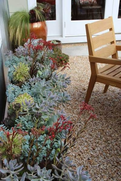 Echeveria & sedum trench planter under the eaves - Bliss Garden Design