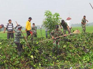 Pasca Banjir, TNI Dan Masyarakat Bebaskan Sungai Bumirejo Dari Sampah Dan Enceng Gondok
