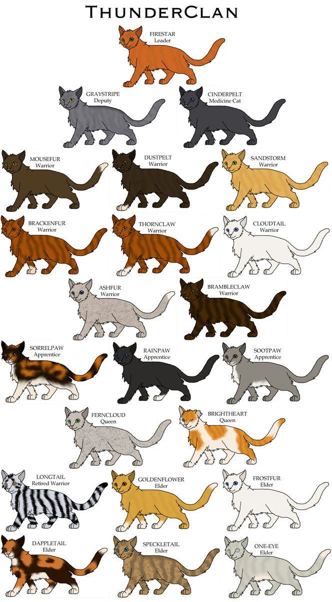Warriors Cats Leafstar  Google Search