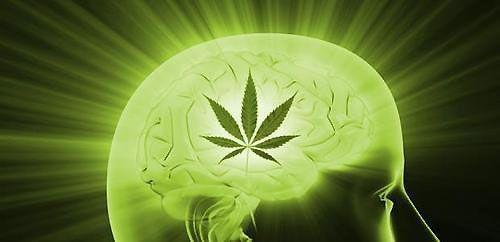 Cannabis : un atout pour la créativité ? - Out the Box !