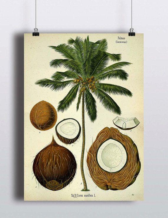Antique Palm Tree Print Coconut Illustration Poster Tropical Beach Decor Botanical Prints Palm Tree Art Nature Home Decor Art Prints