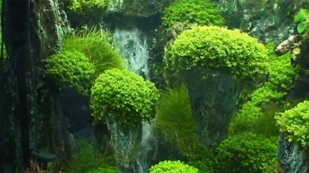 Avatar theme aquascape pinterest news fish tanks for Waterfall fish tank