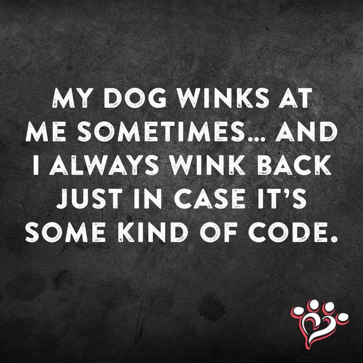 My dog winks at me sometimes... and I always wink back just in case it's some kind of code. ;)