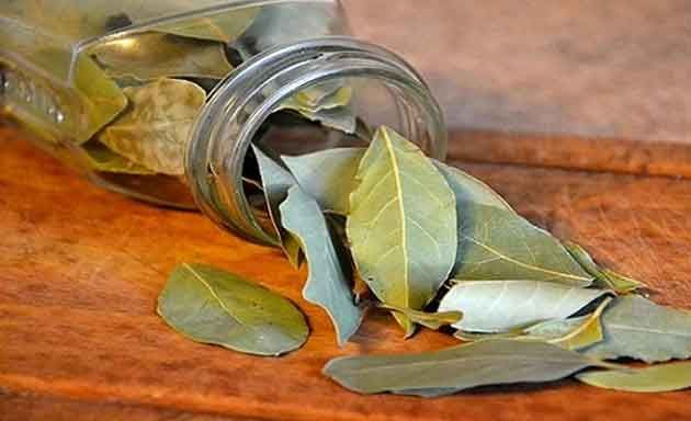 L'alloro è una pianta aromatica di cui tutti bene o male abbiamo sentito parlare. Si utilizzano solo le foglie e le possiamo…