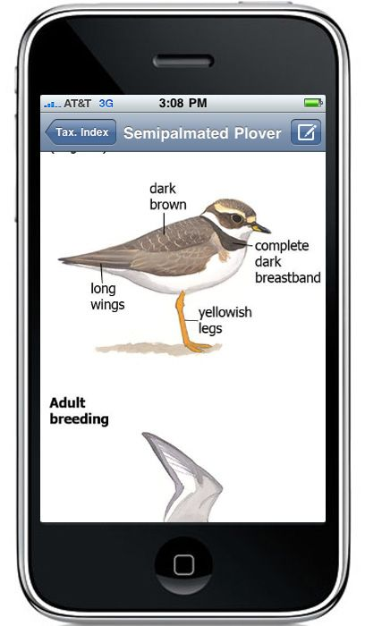 The Sibley Guide to Birds – the most popular, most comprehensive, and…