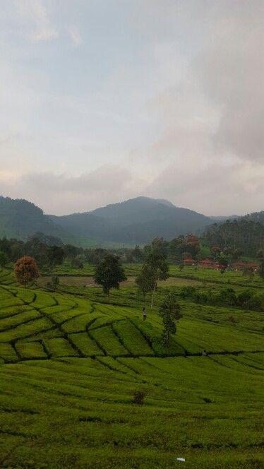 Kebun Teh Bandung - Jawa Barat