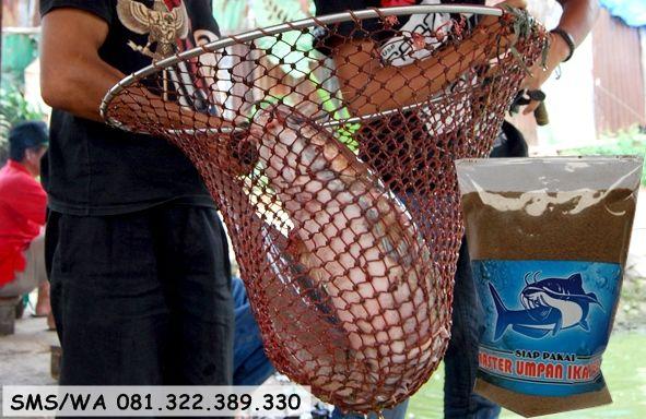 Umpan Serbuk Ikan Lele Harian Ikan