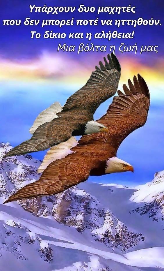 20in πουλί