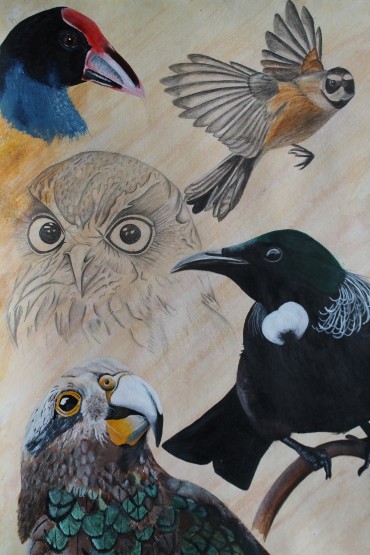 Logan Moffat, 15.  Birds of New Zealand.    Materials-  water colour, pencil and acrylic paint.