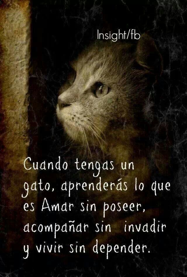 Amar es como tener un gato