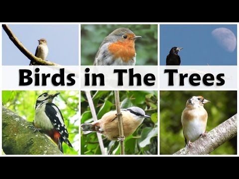 Birds Singing and Chirping in The Forest - YouTube