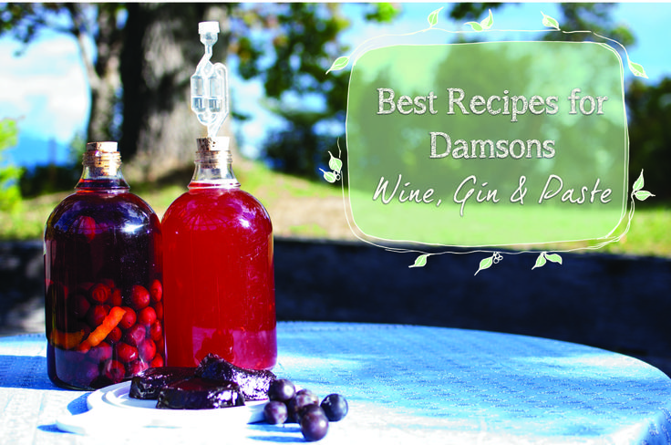 Make your own Damson Gin and intense Damson fruit paste with our best Damson recipes.