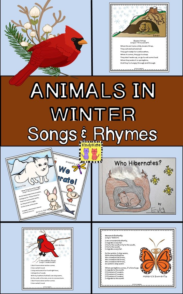 These lively non-fiction songs and rhymes will make your Animals In Winter studies come alive! TpT$