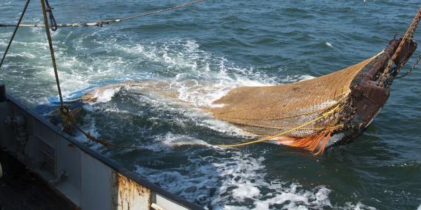 Ecco le aree marine del Mediterraneo che stanno morendo per colpa della pesca a strascico