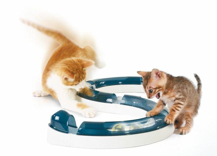 NEW Cat Senses Play Circuit Interactive Toy Kitten Bored Kitty Hotel Game Fun