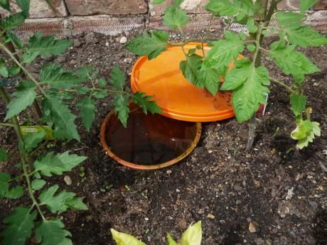 Clay Pot Irrigation - a simple adaptation of an ancient technique | Permaculture Magazine