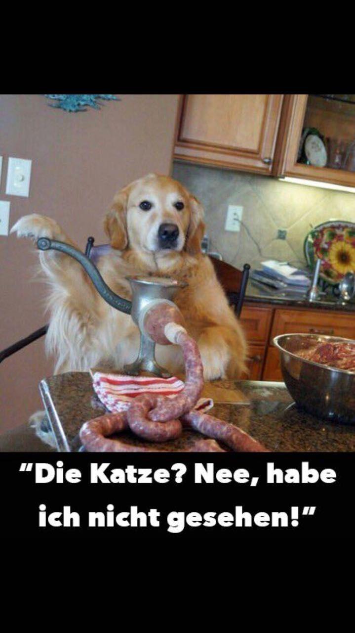 Notitle Tierische Witze Tierwitze Hund Witze Katzen Zitate