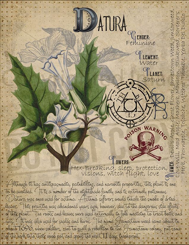 Pin by Grace Carey on BOS | Book of shadows, Witch herbs, Magic herbs