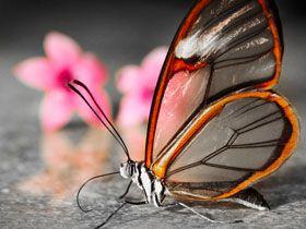 Evrimin açıklayamadığı bir konu: Simetri ve uyum