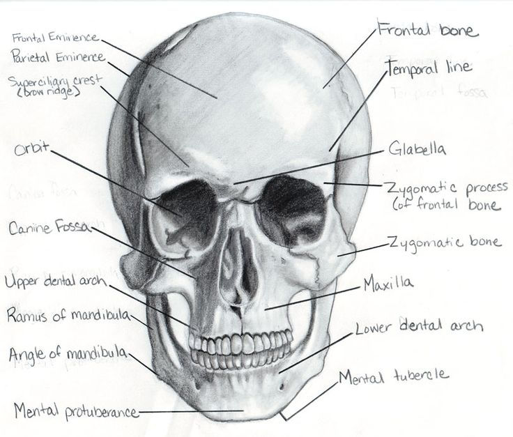 66 best Skulls and skeletons images on Pinterest Skulls Bones