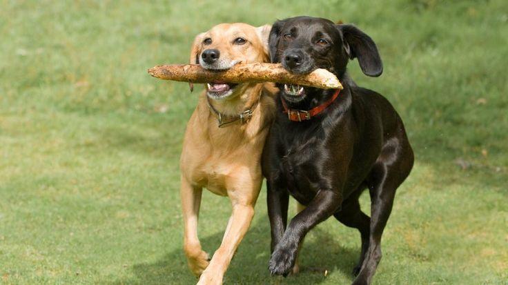 Köpeğinizde Isırma Huyu Varmı   İzmir Köpek Eğitim Okulu