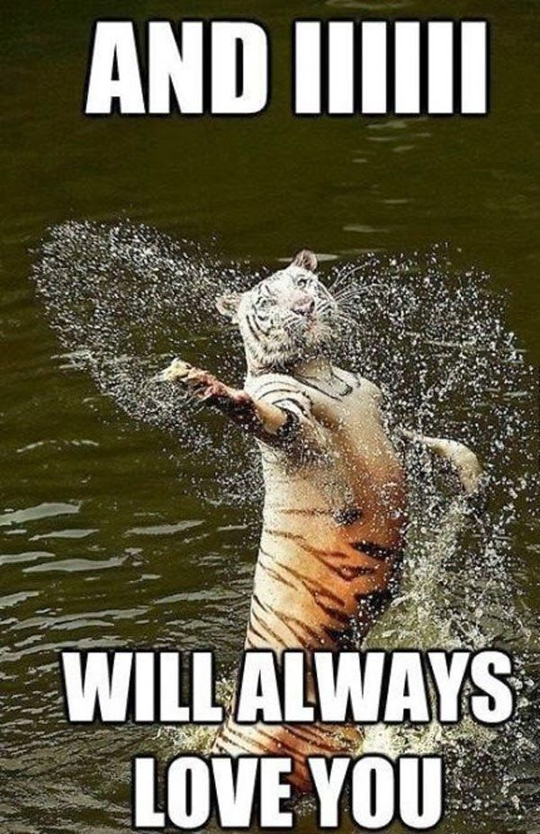 Singing Tiger Meme Always, Love Animal jokes, Funny