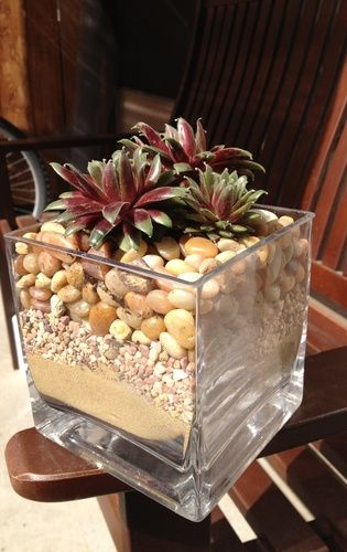 hidden pot so succulents look planted in rocks or sand