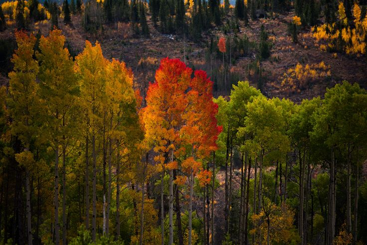 Autumn, tree, leaf colour change and color change HD photo by Nathan Anderson (@nathananderson) on Unsplash