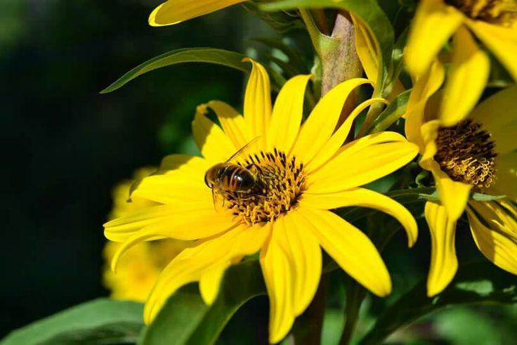 Virág porzás