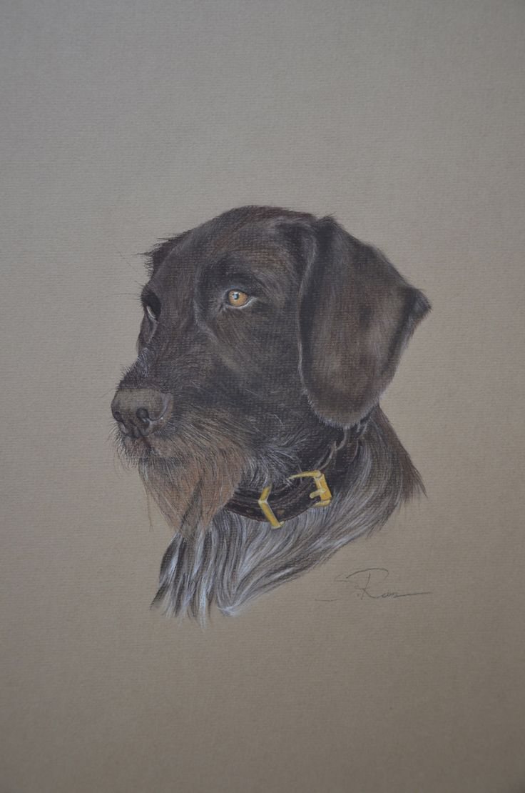 35 best Drahthaar dogs images on Pinterest | German wirehaired ...