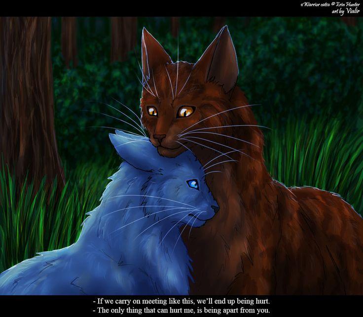 Apprentices Warrior Cats Untold Tales: 118 Best Warrior Cats Images On Pinterest
