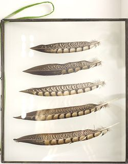 Feathers in a frame