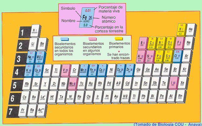 bioelement.gif (133684 bytes)