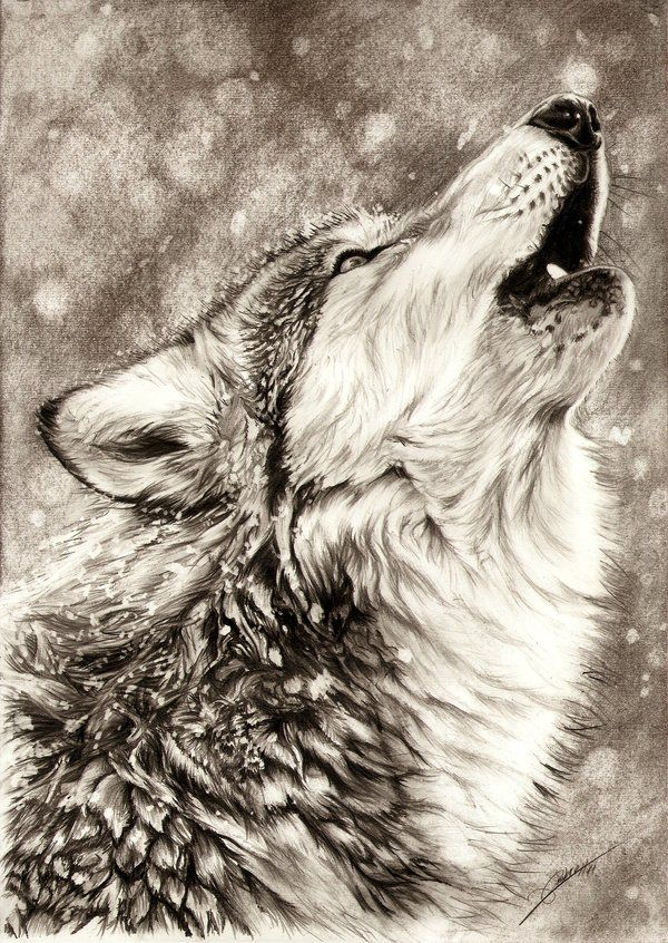 Georgeous and amazing drawing technique for fur & animals in general!! Found here : http://ambr0.deviantart.com/art/Howling-Wolf-256232534