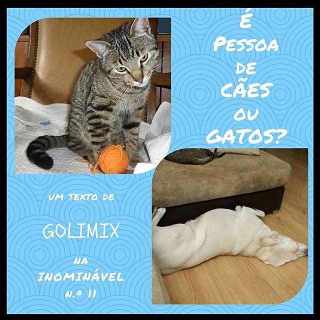Nós gostamos de todos, e a Golimix também. E vocês?  https://buff.ly/2DL01Br  #revistadigital #revistaonline #revista #revistaportuguesa #portuguesemagazine #portugal #animais #gatos #caes #bookstagram #instadaily  [link in bio]
