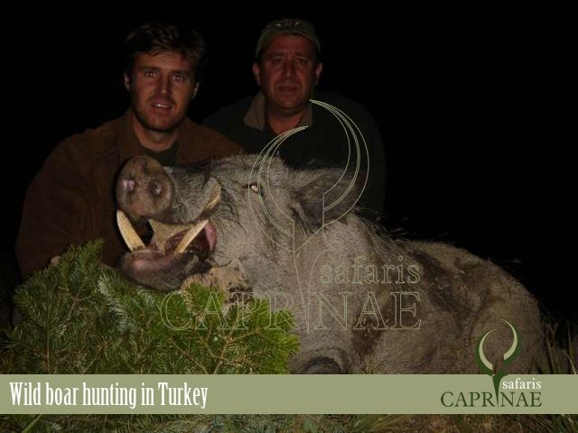 Wild boar hunting in Turkey http://riflescopescenter.com/category/leupold-riflescope-reviews/