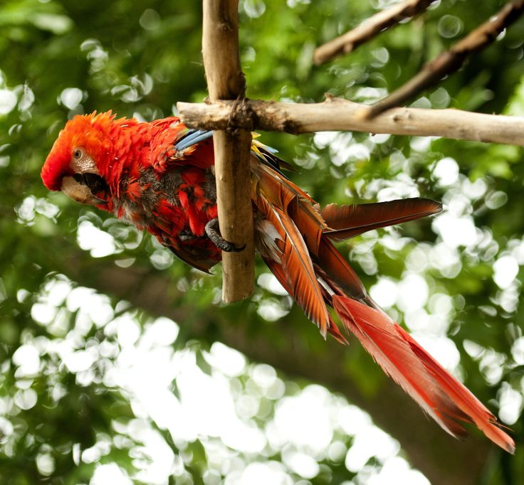Parrots lose a lot of their natural habitat each year due to deforestation.