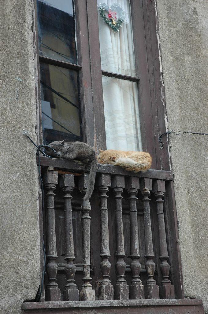 https://flic.kr/p/mvrP3 | Let sleeping cats lie | in Valparaiso